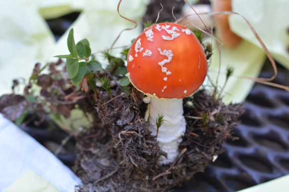 Beautifull, but don't eat this amanita!